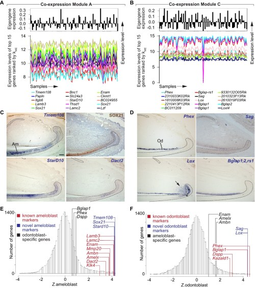 small resolution of identification of gene co expression modules corresponding to distinct lineages of differentiated stem cell progeny