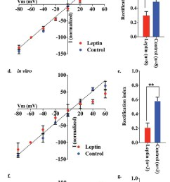 leptin reversed the elimination of ampar rectification in pomc neurons in fasted mice  [ 617 x 1443 Pixel ]