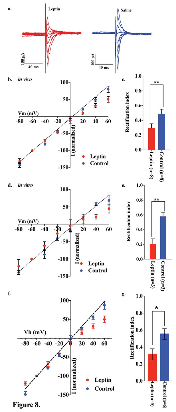 hight resolution of leptin reversed the elimination of ampar rectification in pomc neurons in fasted mice