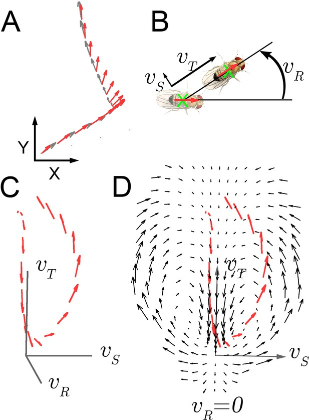Dynamic structure of locomotor behavior in walking fruit