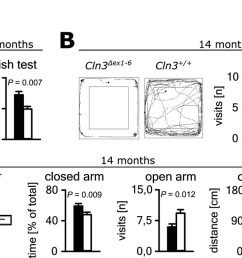 anxiety related behavior in cln3 ex1 6 mice  [ 1500 x 762 Pixel ]