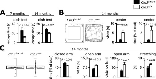 small resolution of anxiety related behavior in cln3 ex1 6 mice
