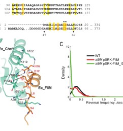 the conserved chey binding site of the c crescentus flim switch protein is required for motor reversal  [ 1500 x 1173 Pixel ]