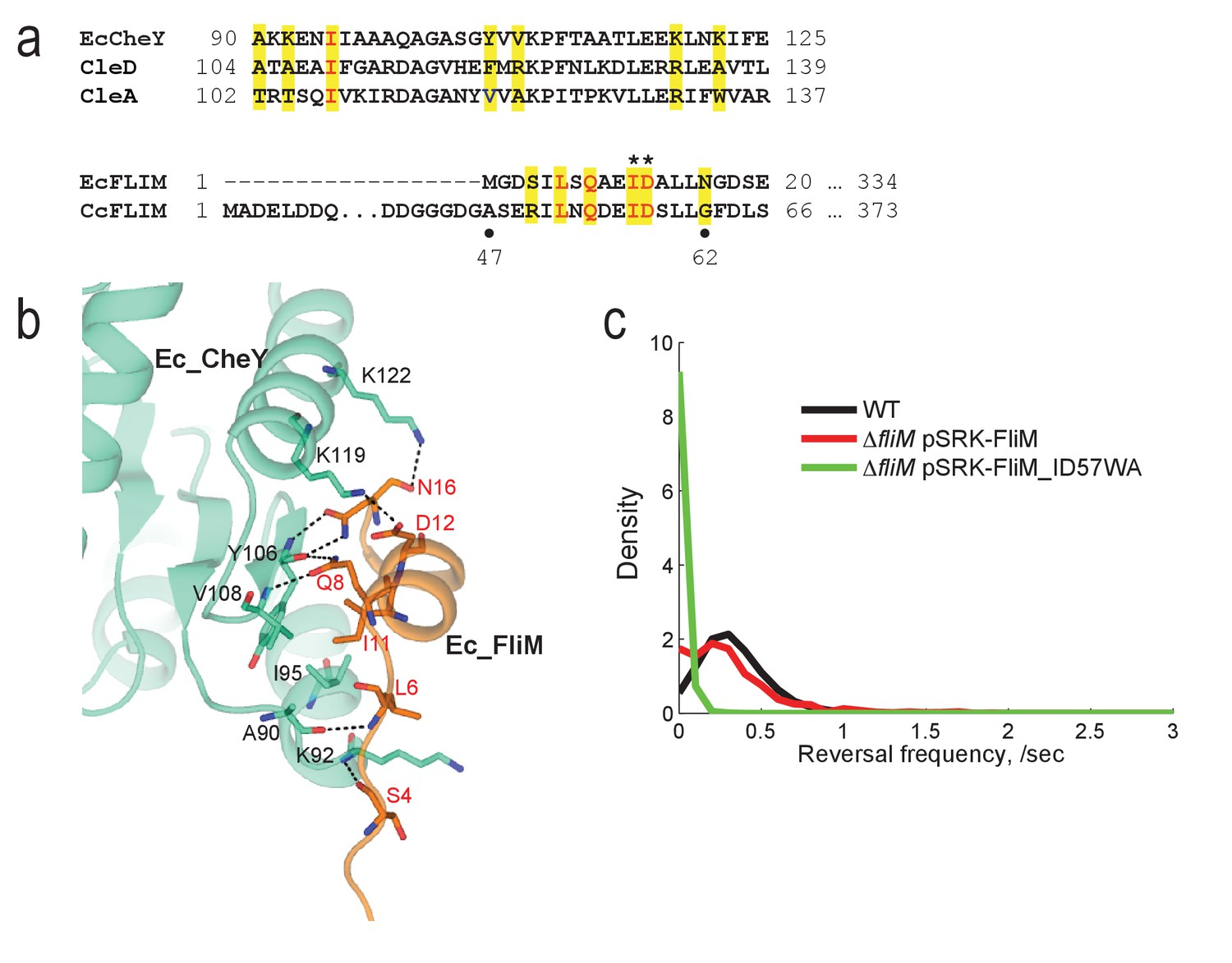 hight resolution of the conserved chey binding site of the c crescentus flim switch protein is required for motor reversal