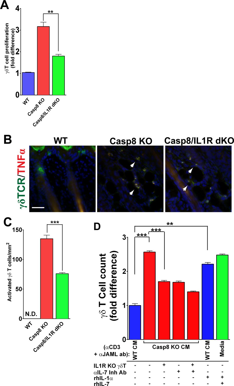 hight resolution of il 1 signaling contributes to t cell proliferation in the caspase 8 cko skin
