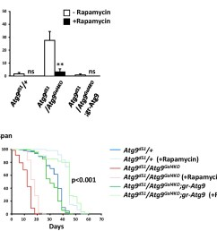 rapamycin treatment rescues the intestinal barrier dysfunction of atg9 mutants  [ 1500 x 1221 Pixel ]