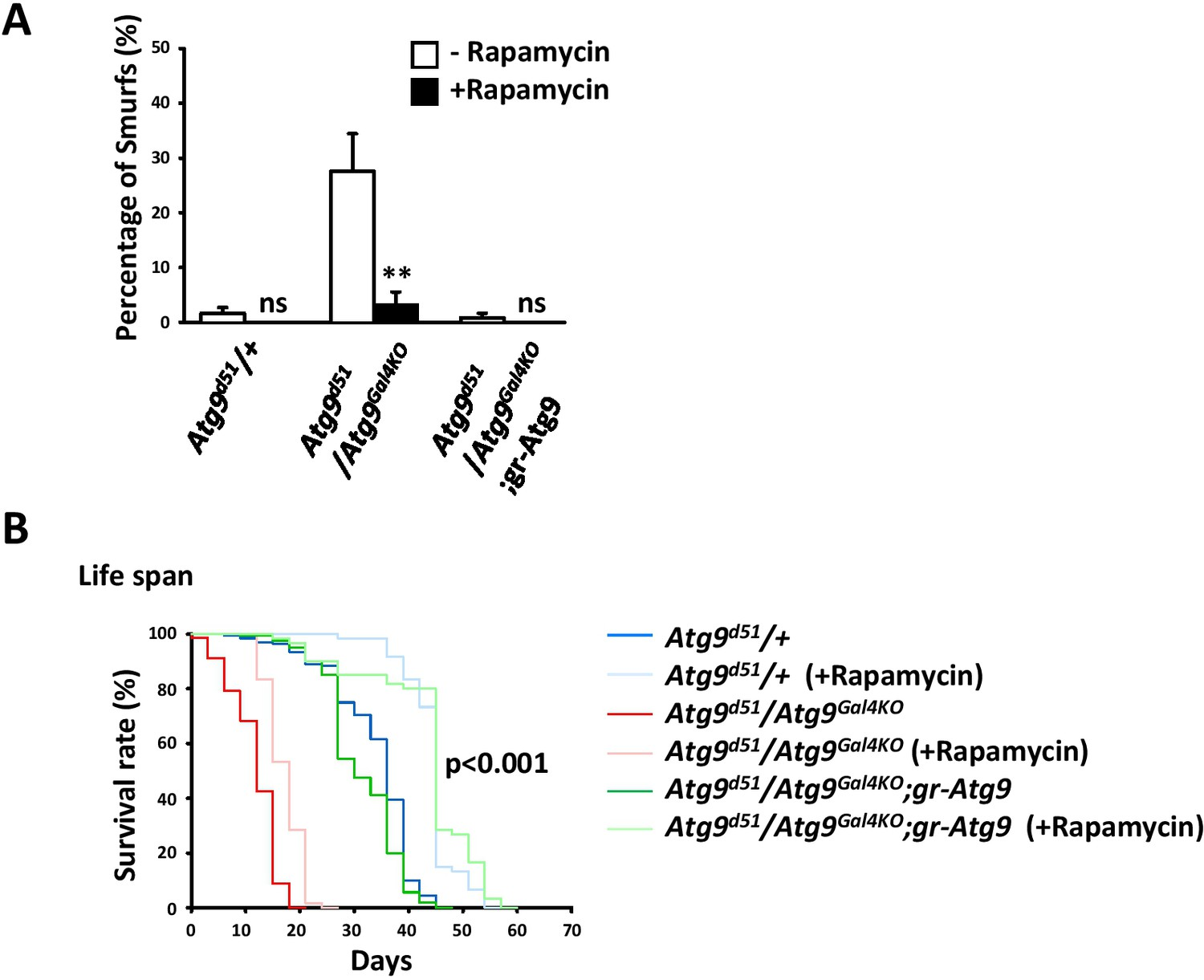 hight resolution of rapamycin treatment rescues the intestinal barrier dysfunction of atg9 mutants