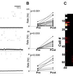 pmc neuronal activity of each rat  [ 1500 x 697 Pixel ]