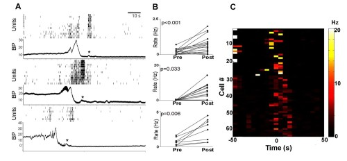 small resolution of pmc neuronal activity of each rat