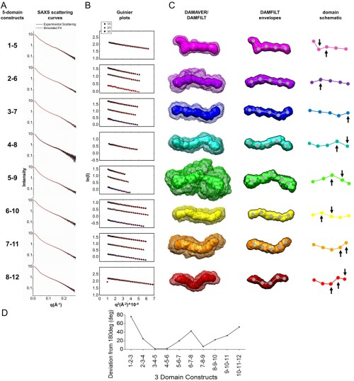 small resolution of experimental saxs data and structures for all ligb ig like domain 5 domain constructs