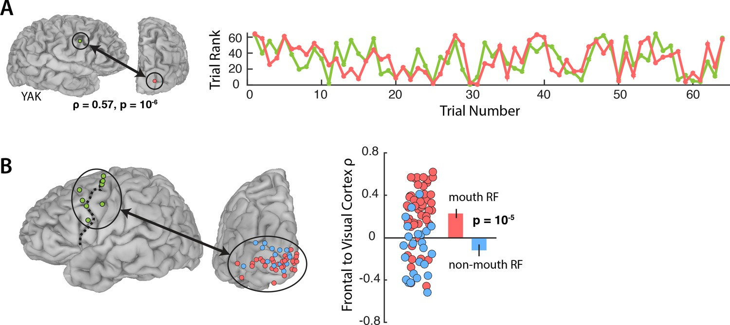 hight resolution of functional connectivity with the frontal cortex