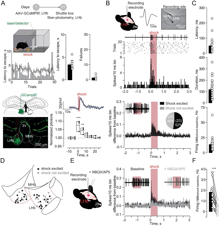 Aversive stimuli drive hypothalamus-to-habenula excitation