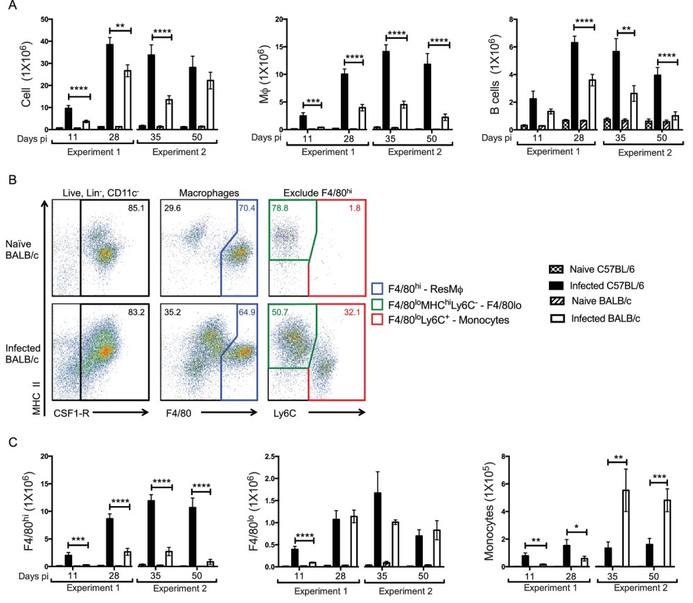 medium resolution of enhanced f4 80hi m and b cell numbers are associated with resistance