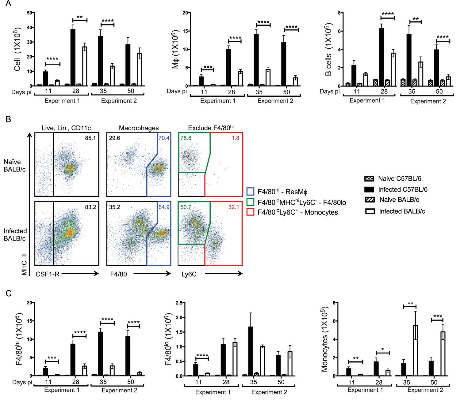 hight resolution of enhanced f4 80hi m and b cell numbers are associated with resistance