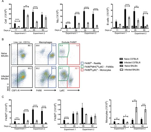 small resolution of enhanced f4 80hi m and b cell numbers are associated with resistance