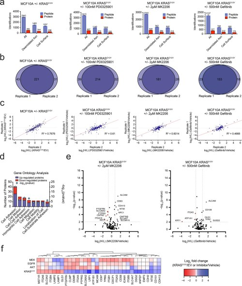 small resolution of oncogenic kras signaling coordinately regulates the expression of cell surface proteins in a model epithelial cell