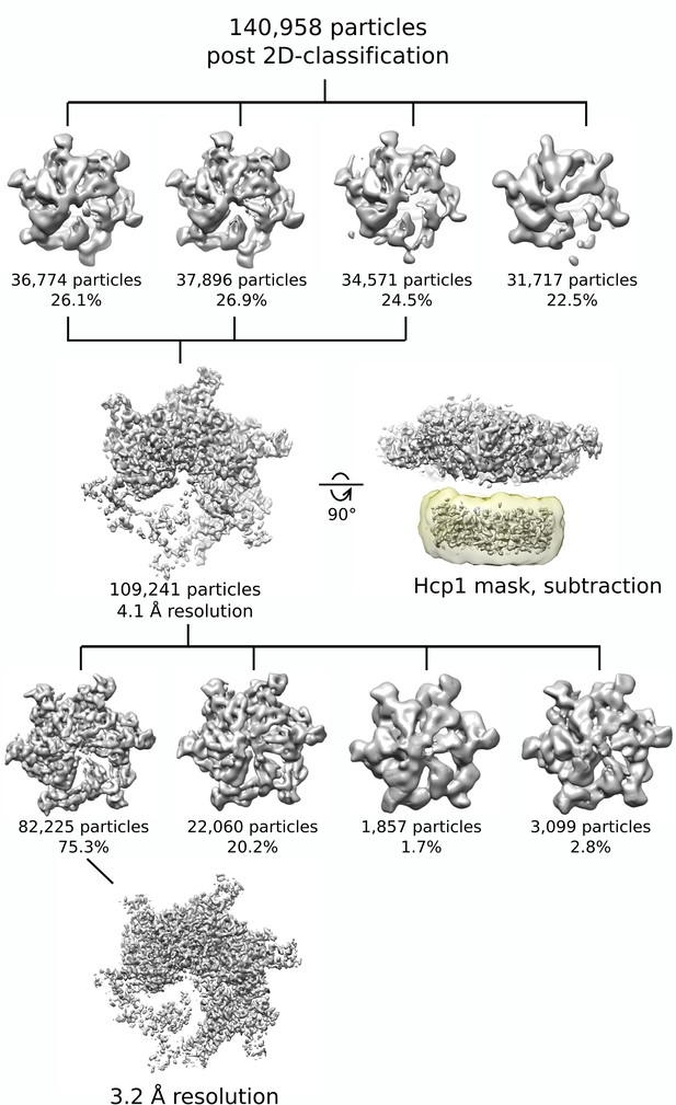 Figures and data in The AAA ATPase Vps4 binds ESCRT-III