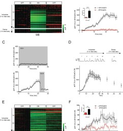 repetitive stimulation of mb potentiates mb to m6 transmission  [ 1322 x 1500 Pixel ]