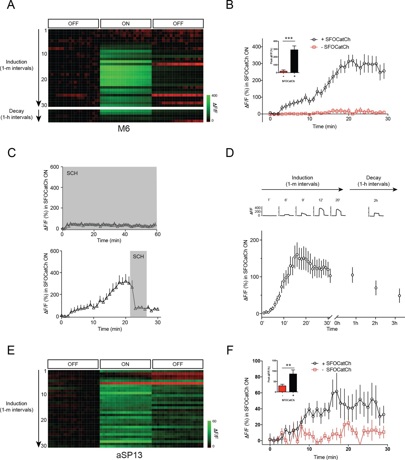 hight resolution of repetitive stimulation of mb potentiates mb to m6 transmission