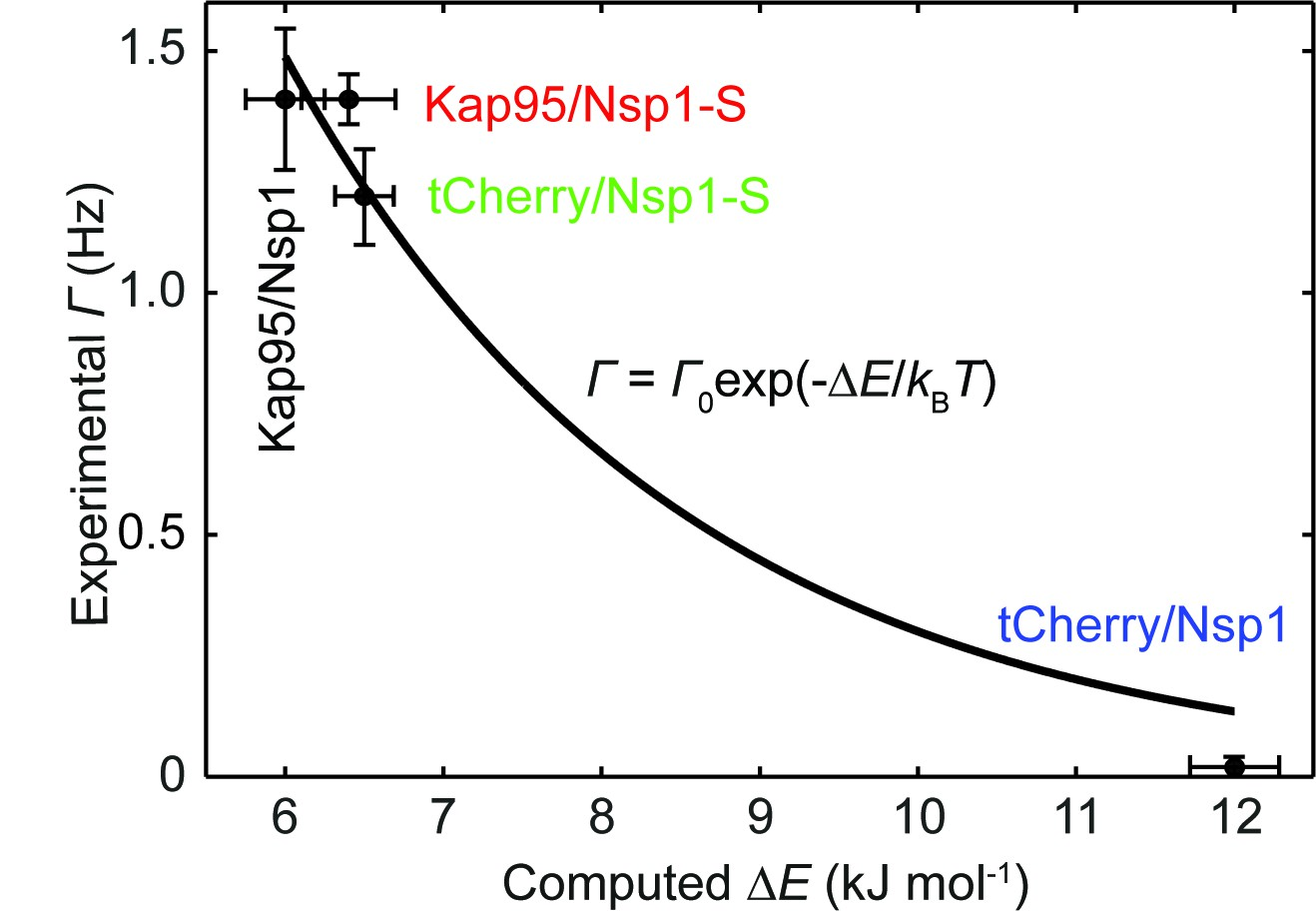 hight resolution of experimental event rate math processing error 0 versus the computed energy barrier e for tcherry and kap95 in nsp1 and nsp1 s pores
