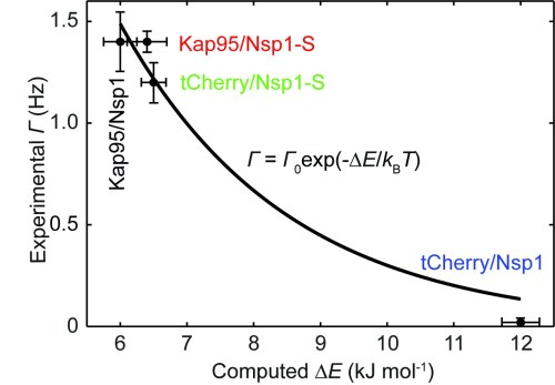 small resolution of experimental event rate math processing error 0 versus the computed energy barrier e for tcherry and kap95 in nsp1 and nsp1 s pores