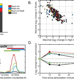 global regulation of dusk gene expression in response to light changes  [ 1500 x 982 Pixel ]