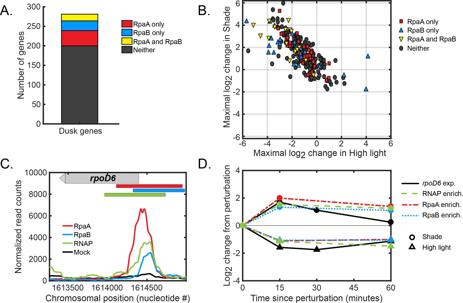 hight resolution of global regulation of dusk gene expression in response to light changes