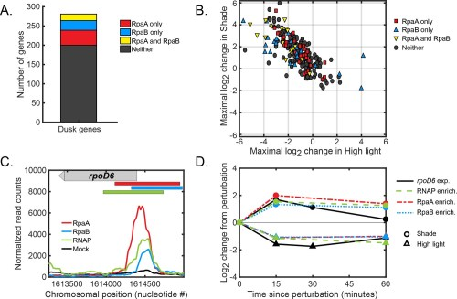 small resolution of global regulation of dusk gene expression in response to light changes