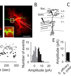 unitary ca3 ca1 synapse recordings from hippocampal pyramidal neurons  [ 1500 x 844 Pixel ]