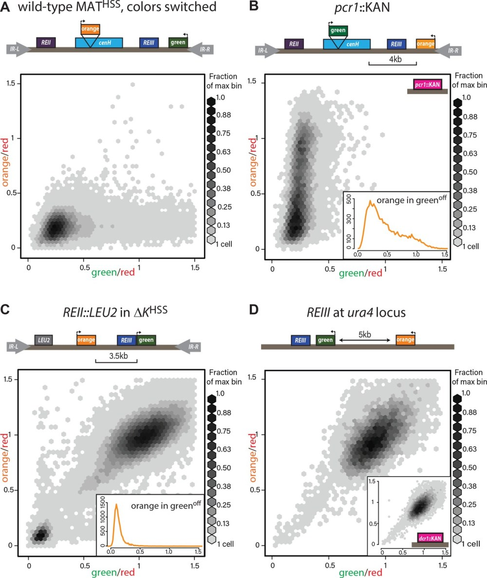 medium resolution of heterochromatin spreading characteristics of cis acting elements at the tightly repressed mat locus