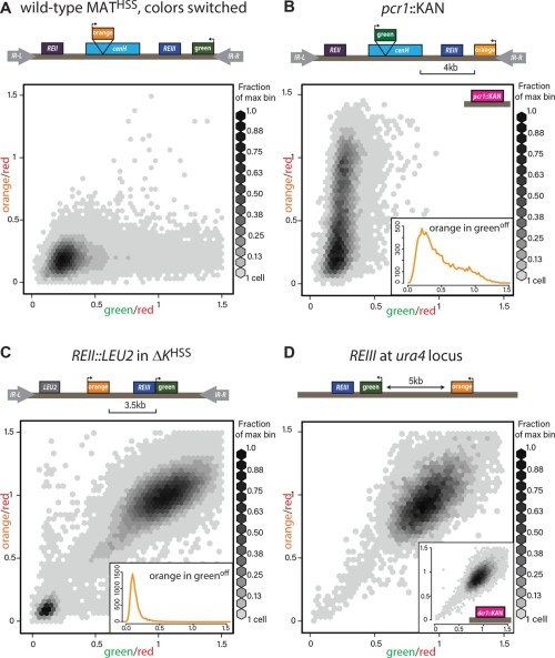 small resolution of heterochromatin spreading characteristics of cis acting elements at the tightly repressed mat locus