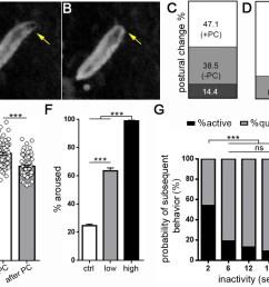 drosophila larval quiescence meets behavioral criteria for sleep  [ 1030 x 864 Pixel ]