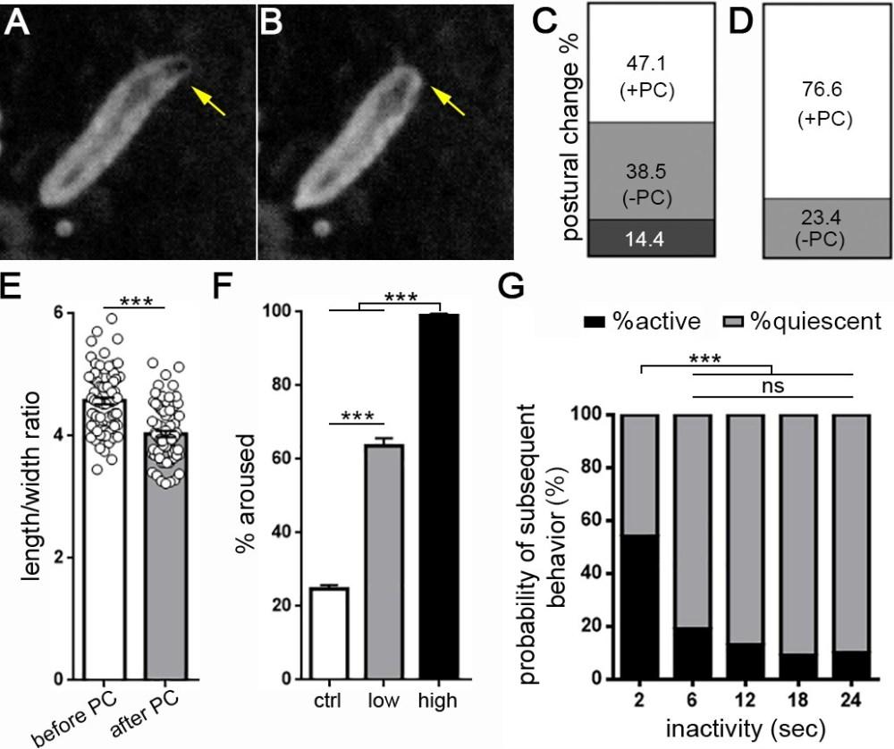 medium resolution of drosophila larval quiescence meets behavioral criteria for sleep