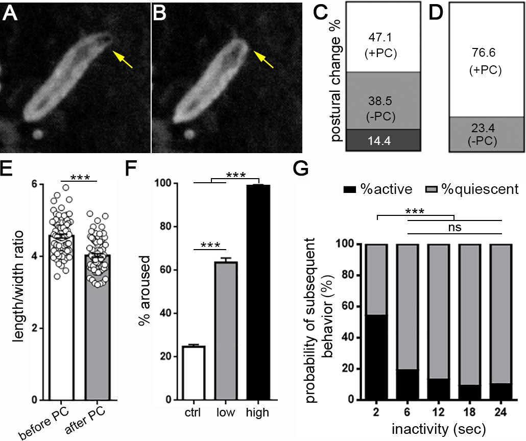 hight resolution of drosophila larval quiescence meets behavioral criteria for sleep