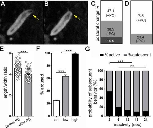 small resolution of drosophila larval quiescence meets behavioral criteria for sleep