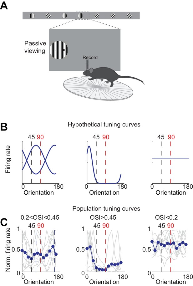 Figures and data in First spikes in visual cortex enable