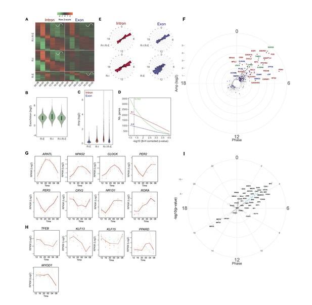 Transcriptomic analyses reveal rhythmic and CLOCK-driven