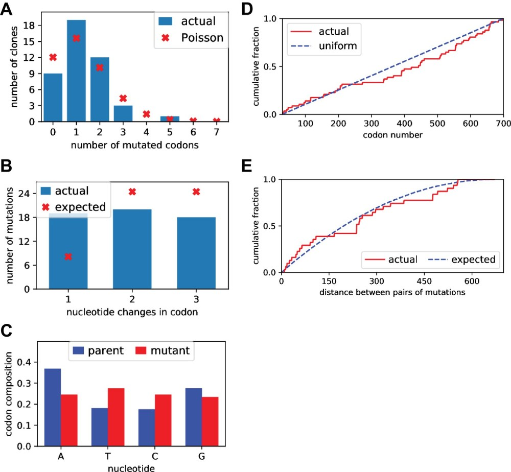 medium resolution of sanger sequencing of selected clones from the mutant plasmid libraries