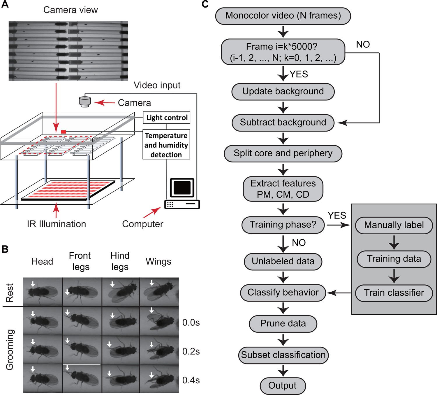 hight resolution of overview of approach for detecting drosophila grooming