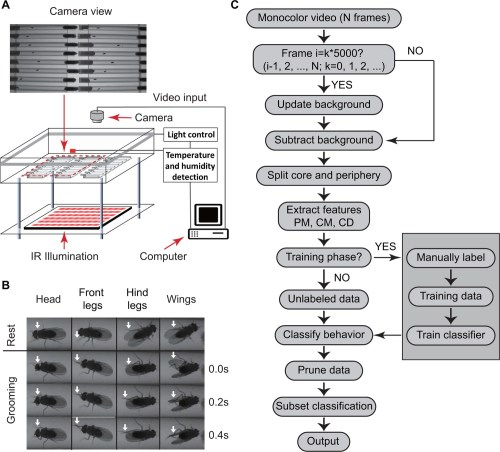 small resolution of overview of approach for detecting drosophila grooming