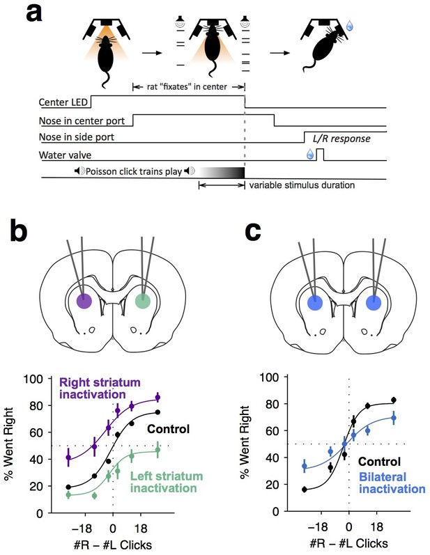 Causal contribution and dynamical encoding in the striatum