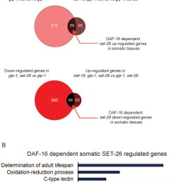 daf 16 dependent somatic set 26 regulated genes are enriched for lifespan determinant genes a venn diagrams  [ 1197 x 1500 Pixel ]