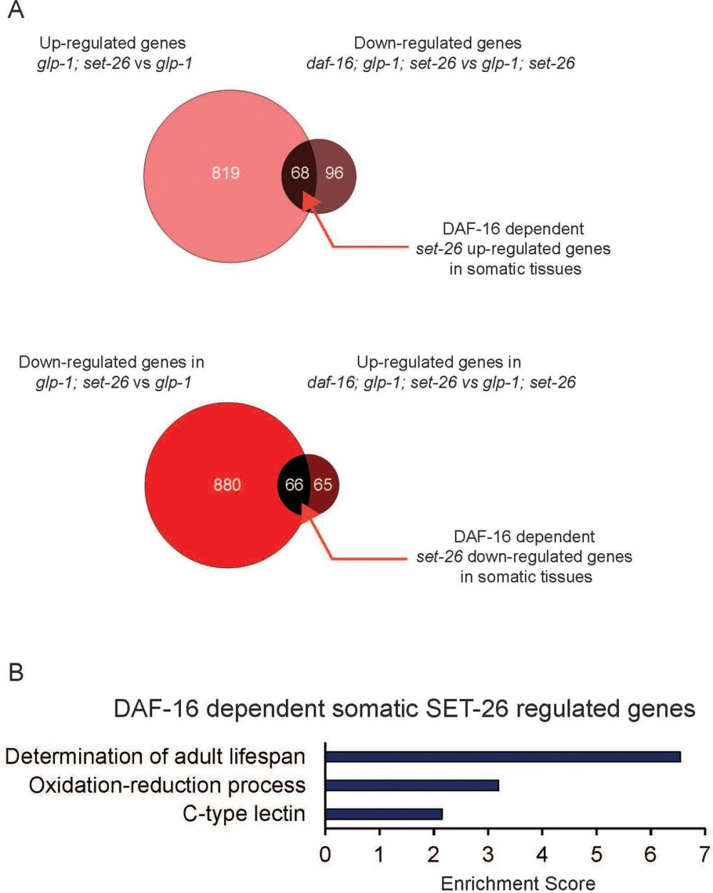 medium resolution of daf 16 dependent somatic set 26 regulated genes are enriched for lifespan determinant genes a venn diagrams