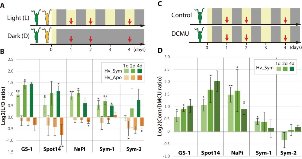 medium resolution of differential expression of hydra genes under influence of chlorella photosynthesis