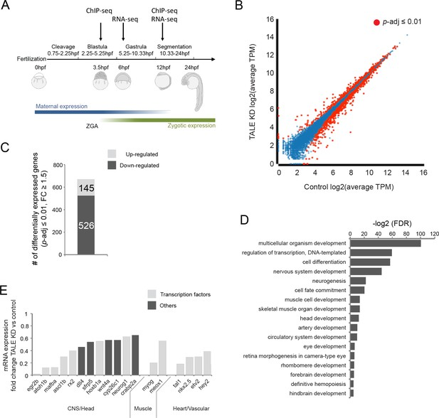 TALE factors use two distinct functional modes to control