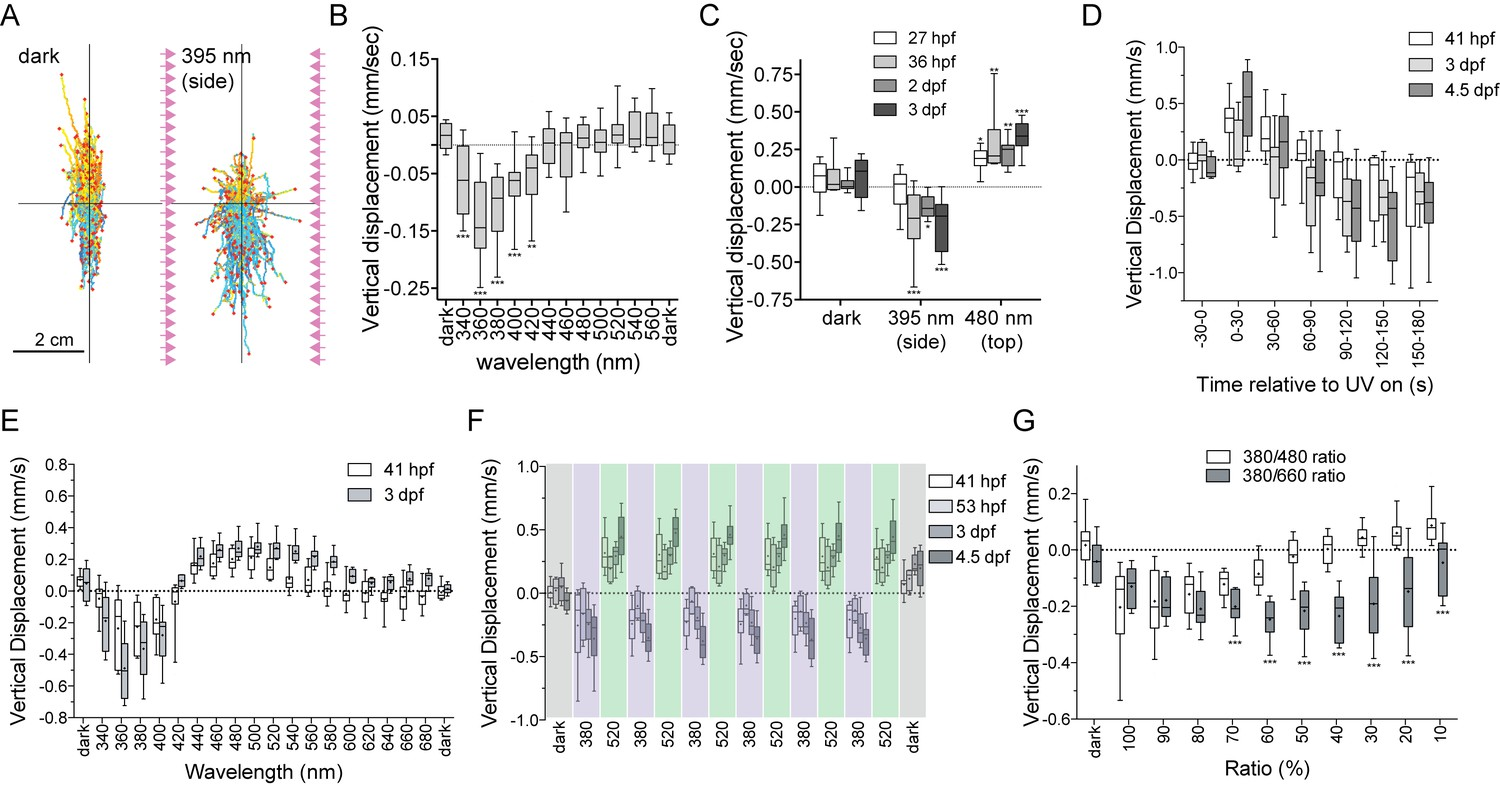 hight resolution of uv violet avoidance and phototaxis form a ratio chromatic depth gauge in platynereis larvae