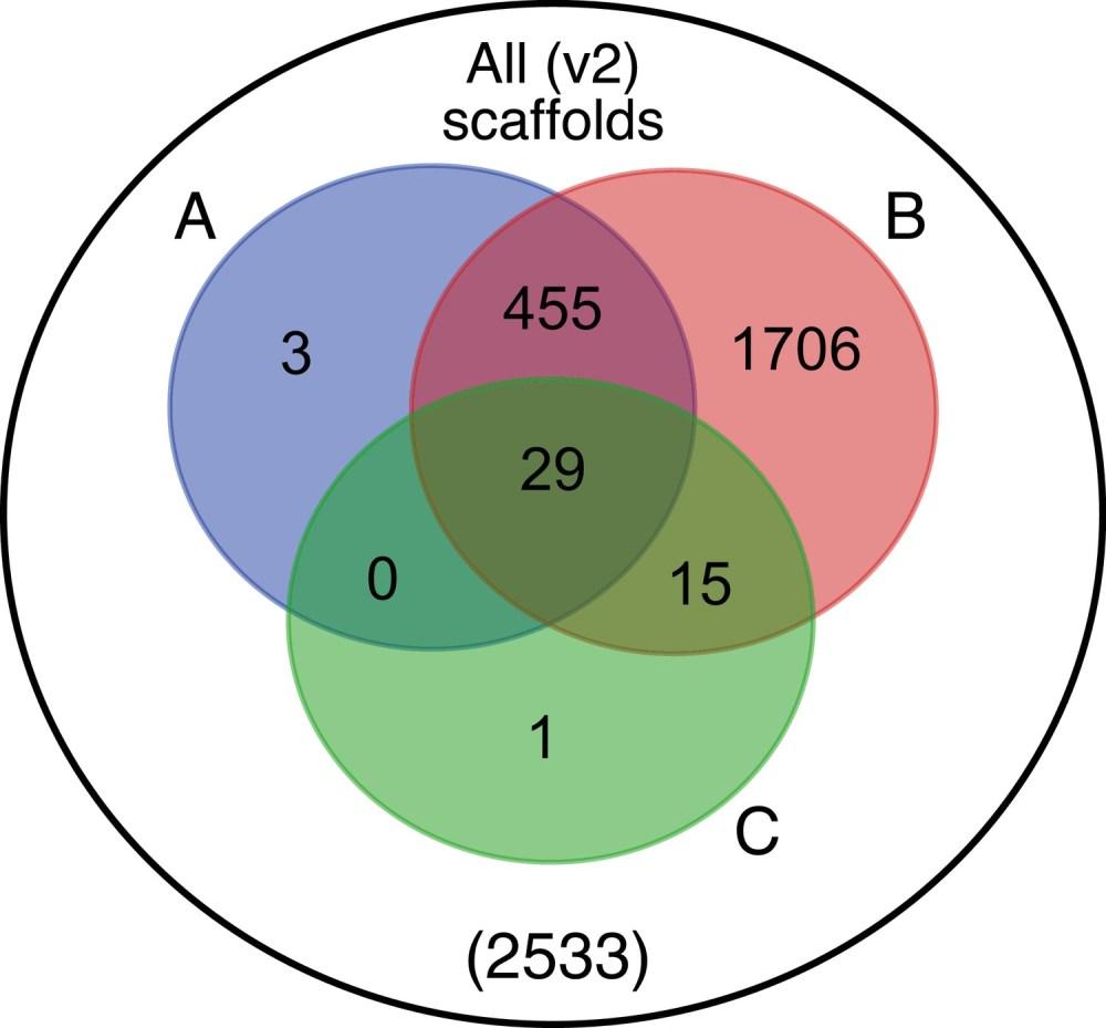 medium resolution of venn diagram representation of blobtools taxonomic annotation filtering approach for ppyr1 2 scaffolds