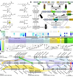 a genomic view of luciferase evolution  [ 1464 x 1500 Pixel ]