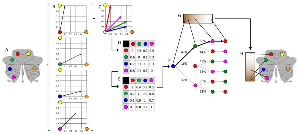 medium resolution of schematic representation of diffusion map embedding