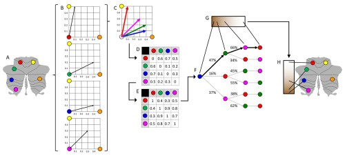 small resolution of schematic representation of diffusion map embedding